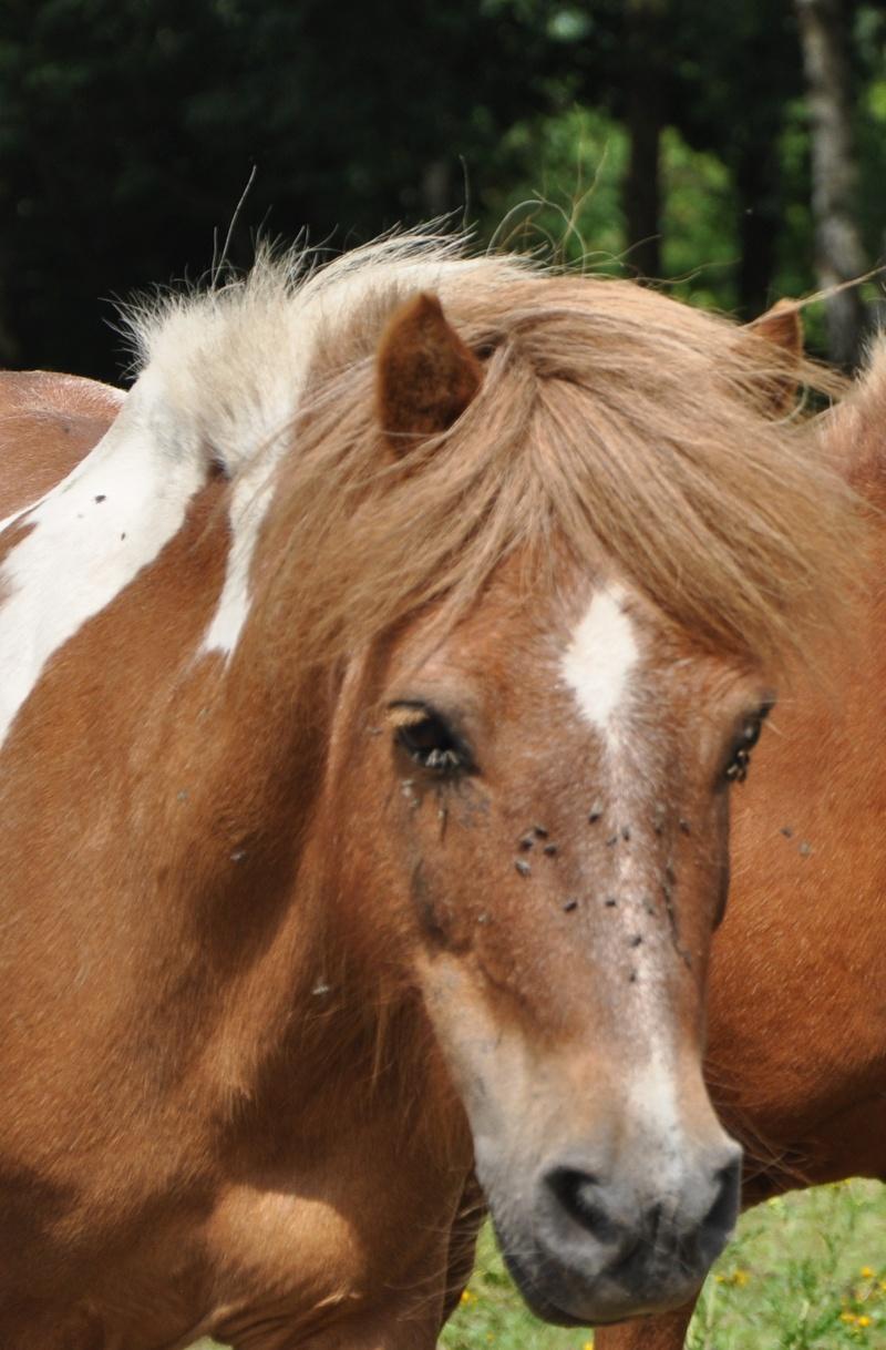 beste paard van stål